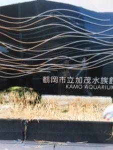 鶴岡市加茂水族館