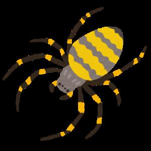 大きい蜘蛛が家の中に出た!退治しない方がいい?どこから入るの?