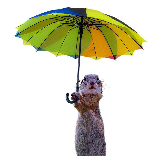 て ミリ 雨 一 どれくらい っ