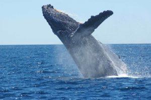 クジラと地震